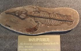 1. Paleontology Student